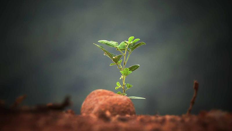 Jong plantje ontspruit uit de grond