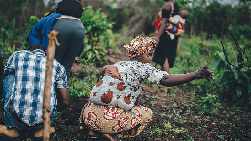 Vrouwen en kinderen bezig met de oogst